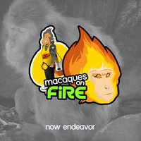 Macaques on Fire — Now Endeavor