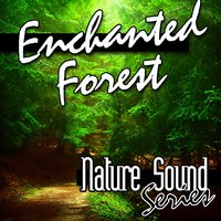 Enchanted Forest (Nature Sounds) — Nature Sound Series