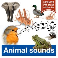 Animal Sounds — Hermes Ph1 Sound-Effects