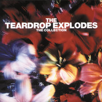 The Collection — The Teardrop Explodes