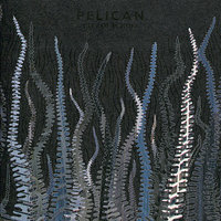 City of Echoes — Pelican
