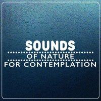 Sounds of Nature for Contemplation — Звуки природы