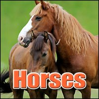 Horses: Sound Effects — Sound Effects Library