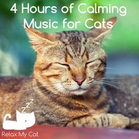 4 Hours of Calming Music for Cats — RelaxMyCat
