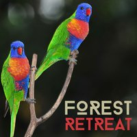 Forest Retreat — Nature Retreat