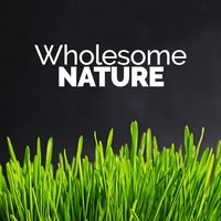 Wholesome Nature — The Healing Sounds of Nature
