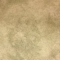 Living Room Carpet — The Gregs