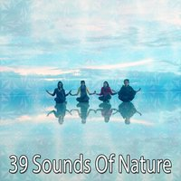 39 Sounds Of Nature — Forest Sounds