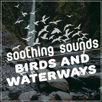 Soothing Sounds: Birds and Waterways — Soothing Sounds