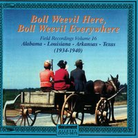 Boll Weevil Here, Boll Weevil Everywhere - Field Recordings Vol. 16 (1934-1940) — Various Artists - Document Records