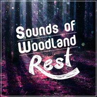 Sounds of Woodland Rest — Dreams of Nature