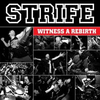Witness a Rebirth — Strife