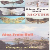 Moths / Pimples of God — Alex from Hell