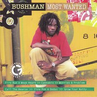 Bushman: Most Wanted — Bushman