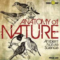Anatomy of Nature — Roberto Vallicelli