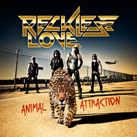 Animal Attraction — Reckless Love