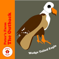 Wedge Tailed Eagle — Peter's Farm