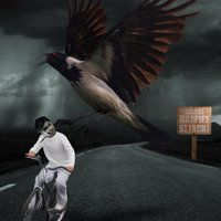 Magpies Attack — Magpies Attack