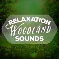 Relaxation Woodland Sounds — Nature Sound Series, Natural Sounds, Deep Sleep Relaxation, Nature Sound Series|Deep Sleep Relaxation|Natural Sounds