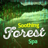 Soothing Forest Spa — Forest Sounds Relaxing Spa Music Singing Birds