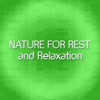 Nature for Rest and Relaxation — Nature Sounds for Sleep and Relaxation
