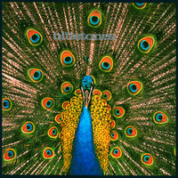 Expecting To Fly — The Bluetones