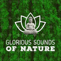 Glorious Sounds of Nature — Nature Sound Collection