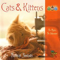 Cats & Kittens — Our World's Sounds