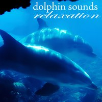 Dolphins Sounds Relaxation — Sea Nature Players