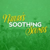 Nature's Soothing Sounds — Sounds of Nature!, Soundscapes!, The Calming Sounds of Nature, The Calming Sounds of Nature|Sounds of Nature!|Soundscapes!