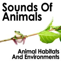 Sounds of Animals: Animal Habitats and Environments — Pro Sound Effects Library