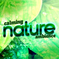 Calming Nature Ambience — Deep Sleep Nature Sounds