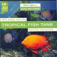 Tropical Fish Tank — The Hit Crew