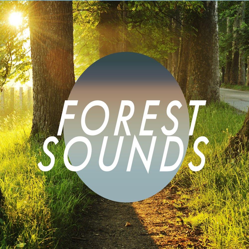 Forest Sounds — Forest Sounds  Слушать онлайн на Яндекс Музыке