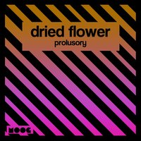 Prolusory — Dried Flower