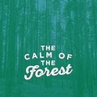 The Calm of the Forest — Natural Forest Sounds