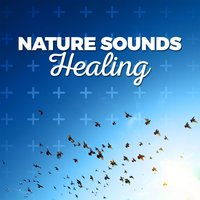 Nature Sounds: Healing — Nature Ambience