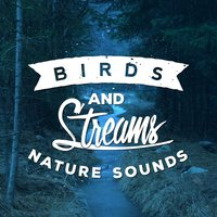 Birds and Streams - Nature Sounds — Forest Sounds Relaxing Spa Music Singing Birds, Sleep Songs with Nature Sounds, Best Nature Sounds for Relaxing, Sleep Songs with Nature Sounds|Best Nature Sounds for Relaxing|Forest Sounds Relaxing Spa Music Singing Birds