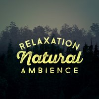 Relaxation: Natural Ambience — Relaxing Nature Ambience
