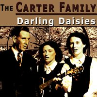 Darling Daisies — The Carter Family