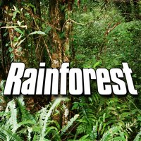 Rainforest (Nature Sound) — Sounds Of The Earth