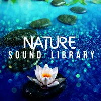 Nature Sound Library — Sleep Sound Library