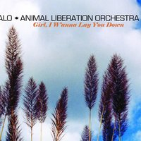 Girl, I Wanna Lay You Down — ALO (Animal Liberation Orchestra)