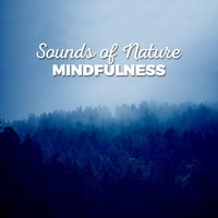 Sounds of Nature: Mindfulness — Sounds of Nature!