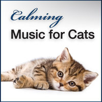 Calming Music for Cats: Gentle Songs to Relax and Calm Down Your Pet Cat — Soothing Music & Nature Sounds for Kittens Playing, Relaxing, Sleeping