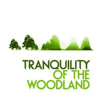 Tranquility of the Woodland — Forest Sounds Relaxing Spa Music Singing Birds
