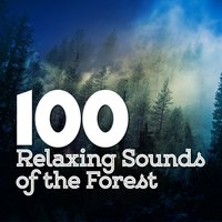 100 Relaxing Sounds of the Forest — Nature Sound Series, Rest & Relax Nature Sounds Artists, Sonidos de la naturaleza Relajacion, Nature Sound Series|Rest & Relax Nature Sounds Artists|Sonidos de la naturaleza Relajacion