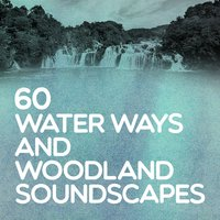 60 Water Ways and Woodland Soundscapes — сборник