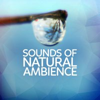 Sounds of Natural Ambience — Rest & Relax Nature Sounds Artists, Nature Sounds 2015, Nature Sound Series, Rest & Relax Nature Sounds Artists|Nature Sound Series|Nature Sounds 2015