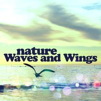 Nature: Waves and Wings — Mediation Sounds of Nature, Relaxing Waves, Mediation Sounds of Nature|Relaxing Waves